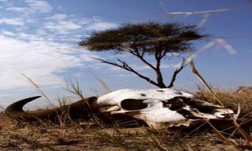 Zdjecie ZIMBABWE / Hwange National Park / Hwange National Park / Życie...