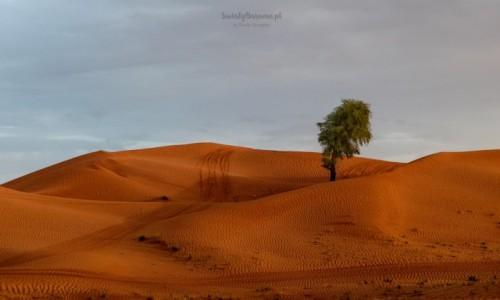 Zdjęcie ZJEDNOCZONE EMIRATY ARABSKIE / Zjednoczone Emiraty Arabskie / Dubaj / Przepiękna pustynia na granicy ZEA-Oman